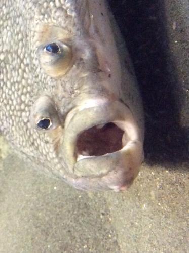 水族館へ行って来ました。
